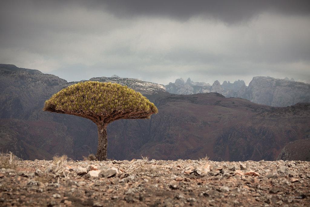 Socotra Island, Diksam Plateau with Haggir Mountains, 2010