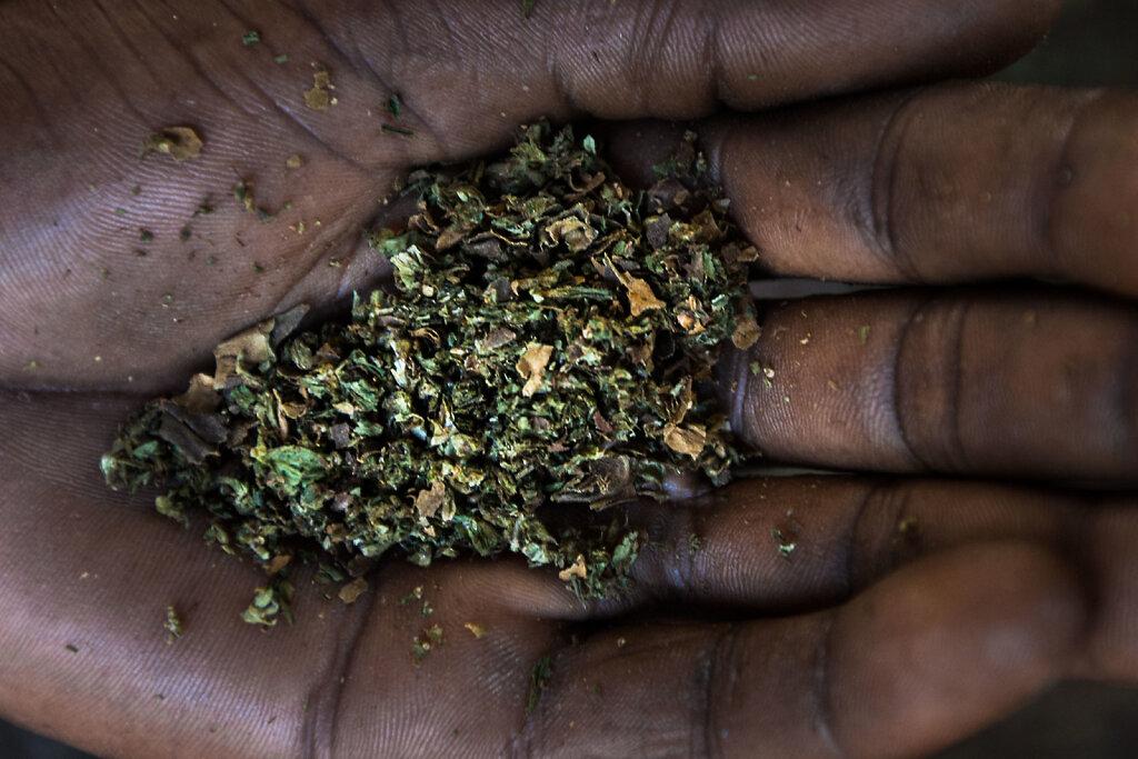 Marijuana series 2, 2013